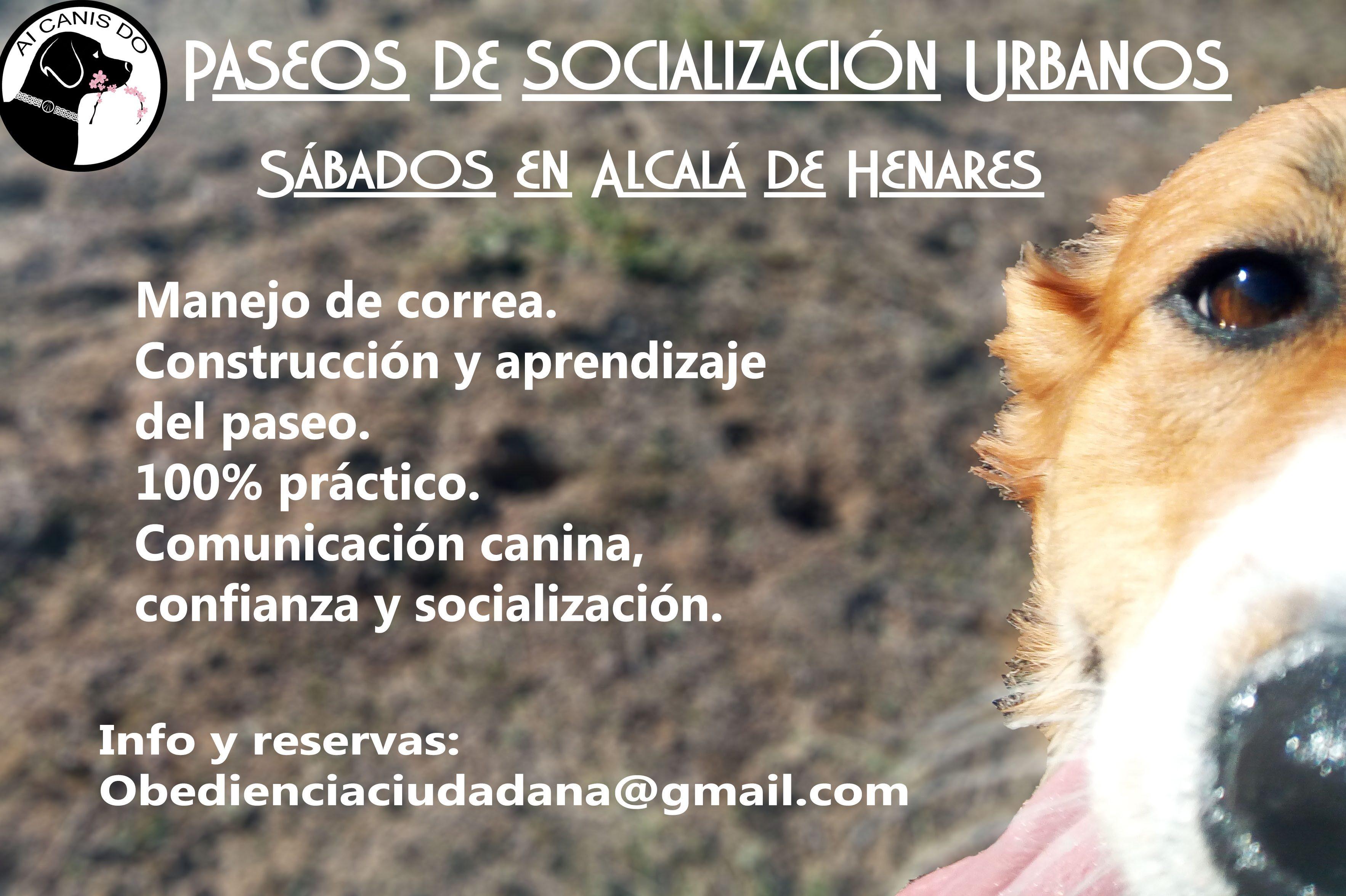 Paseos de Socialización en Ciudad. (Dos sábados alternos al més)