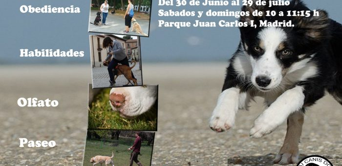 SUMMER DOG SCHOOL   30 de Junio a 29 de Julio